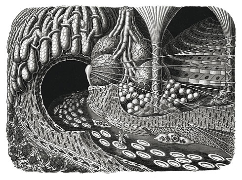 """Fairytale journey along the bloodstream – Entering a glandular cavity with an idealized cell-scape,"" illustration by Arthur Schmitson for Kahn's ""Life of Man, Vol. II,"" 1924"